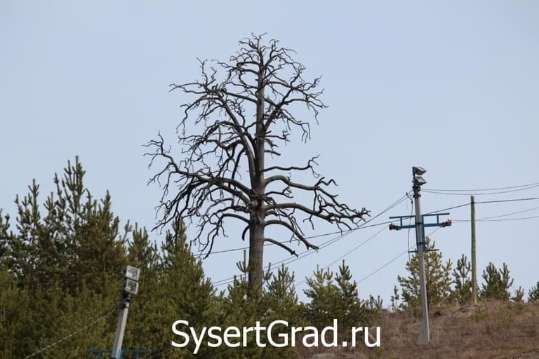Страшное дерево на горе