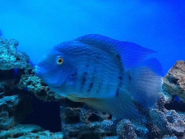 Рыбка со второго этажа