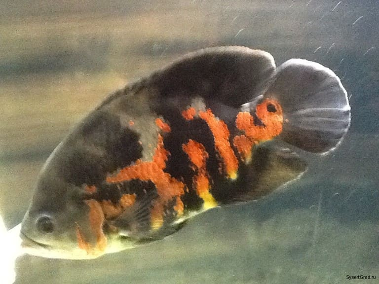 Рыбка с первого этажа