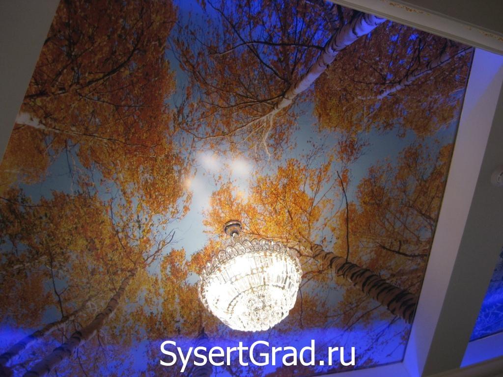 Русский зал березы