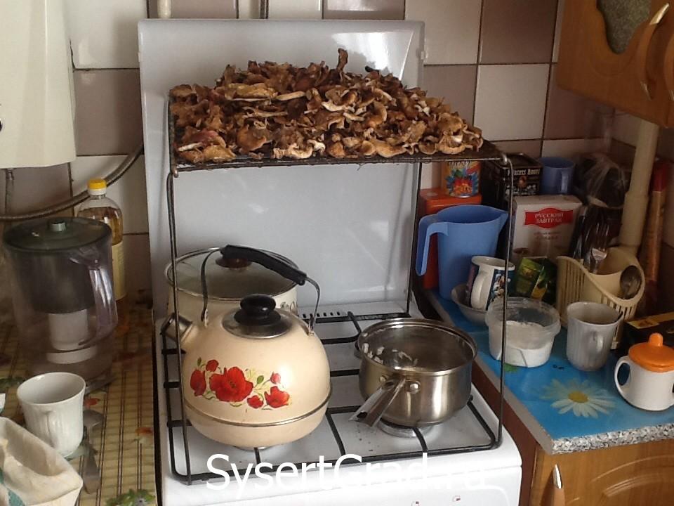 Сушеные грибы на зиму