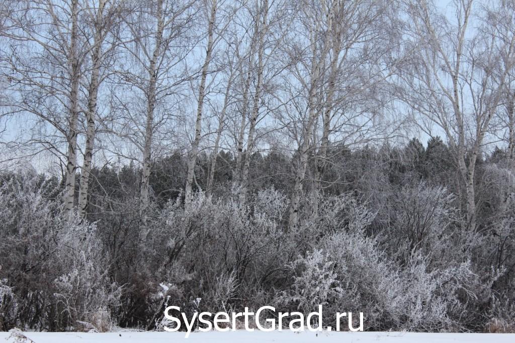 Мороз украшает деревья
