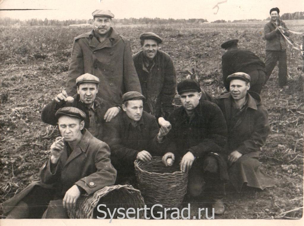 На картошке в Сысертском районе
