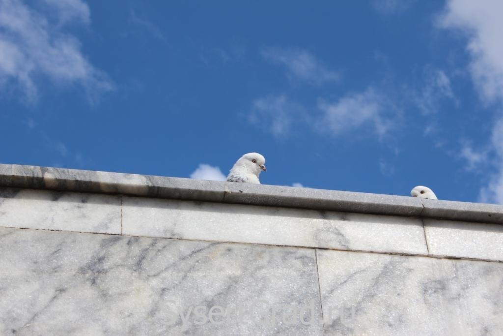 Голуби в Сысерти после 9 мая сидят на памятнике уже неделю
