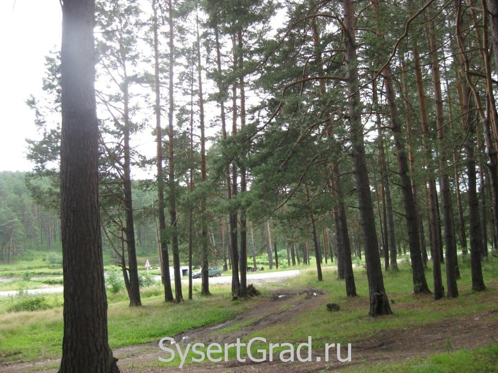 По Черновской дороге за грибами