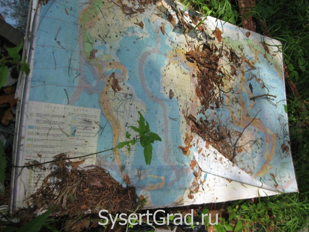 Карта в лесу
