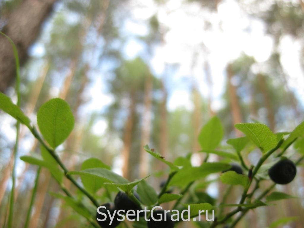 Лес из подлеска