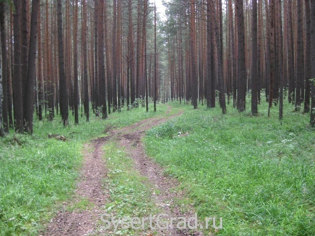 Лесные дороги всегда красивы