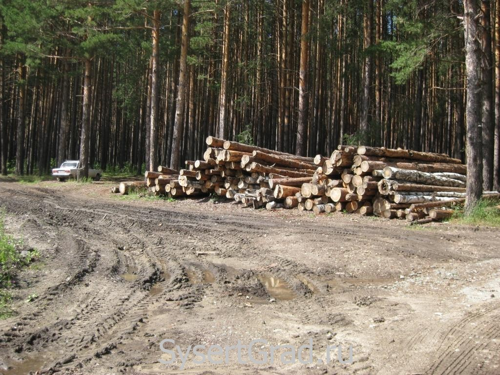 Срубленный лес у Черновской дороги
