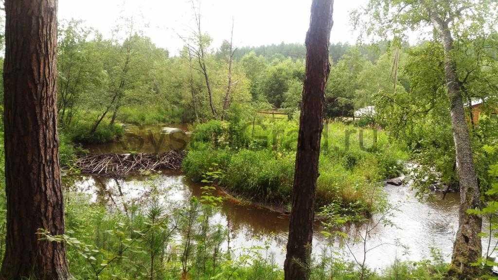 Бобры пусти реку в обход