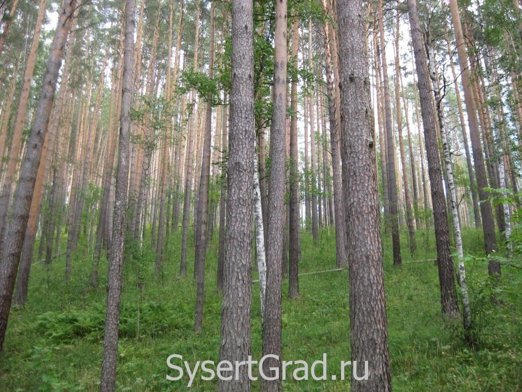 Лес возле Тальков камня