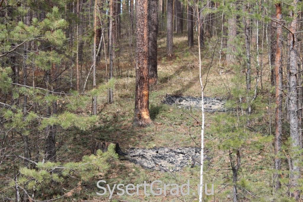 Прореживание леса в Сысерти на выезде на трассу М5