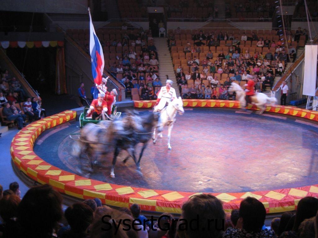 Лошади в цирке