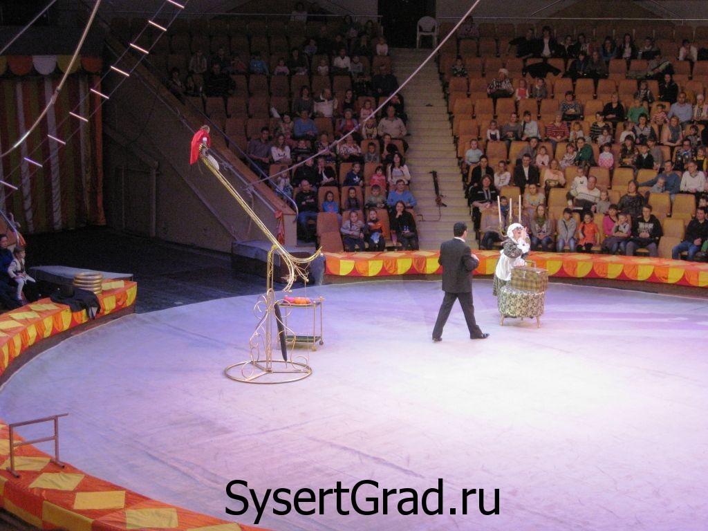 Обезьяны в цирке