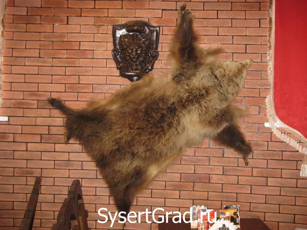 Sport-bar shkura medvedja