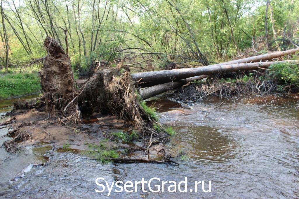 Подмытые водой деревья упали