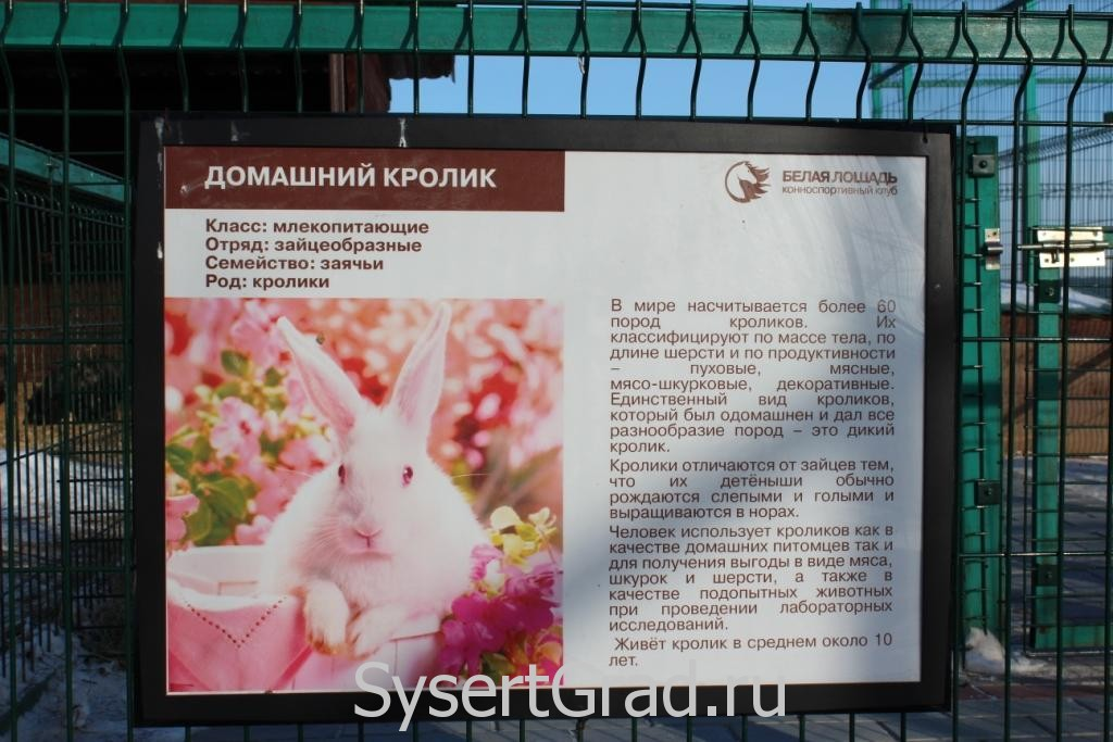 Информационный плакат о домашнем кролике в КСК Белая лошадь