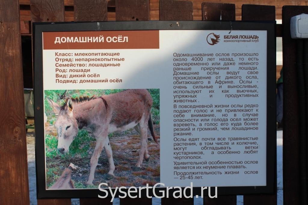 Информационный плакат о домашнем осле