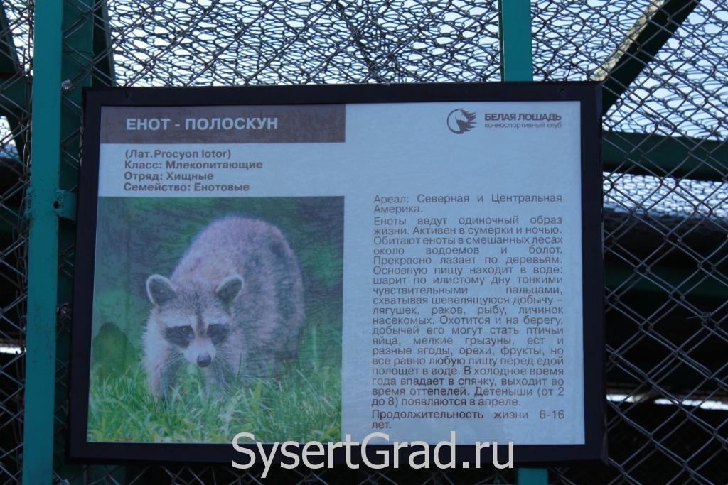 Информационный плакат о еноте-полоскуне