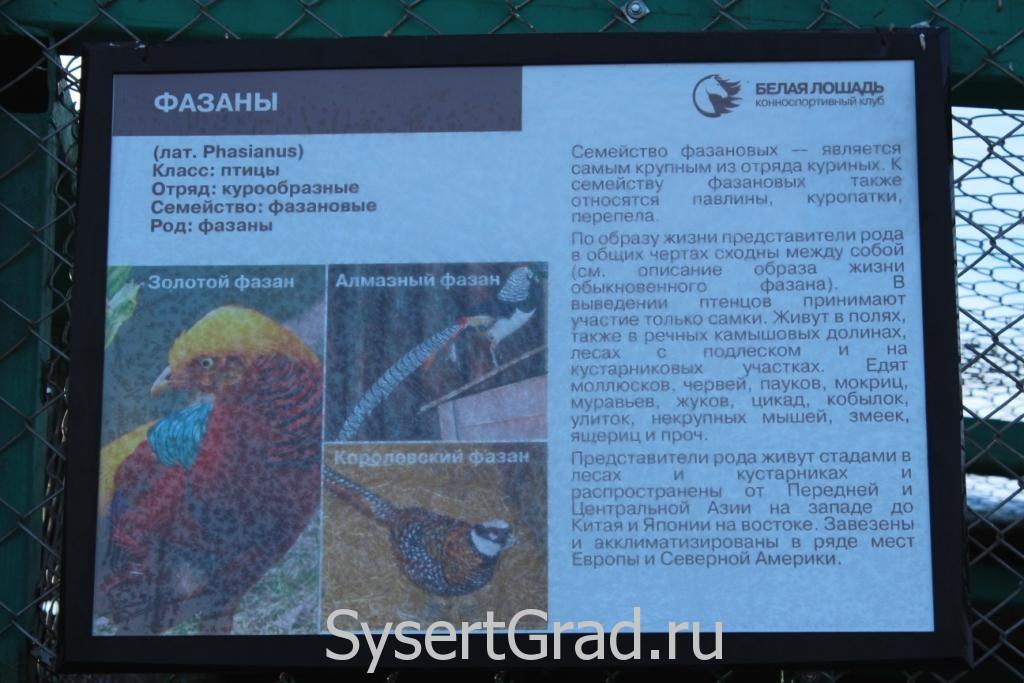 Информационный плакат о фазанах