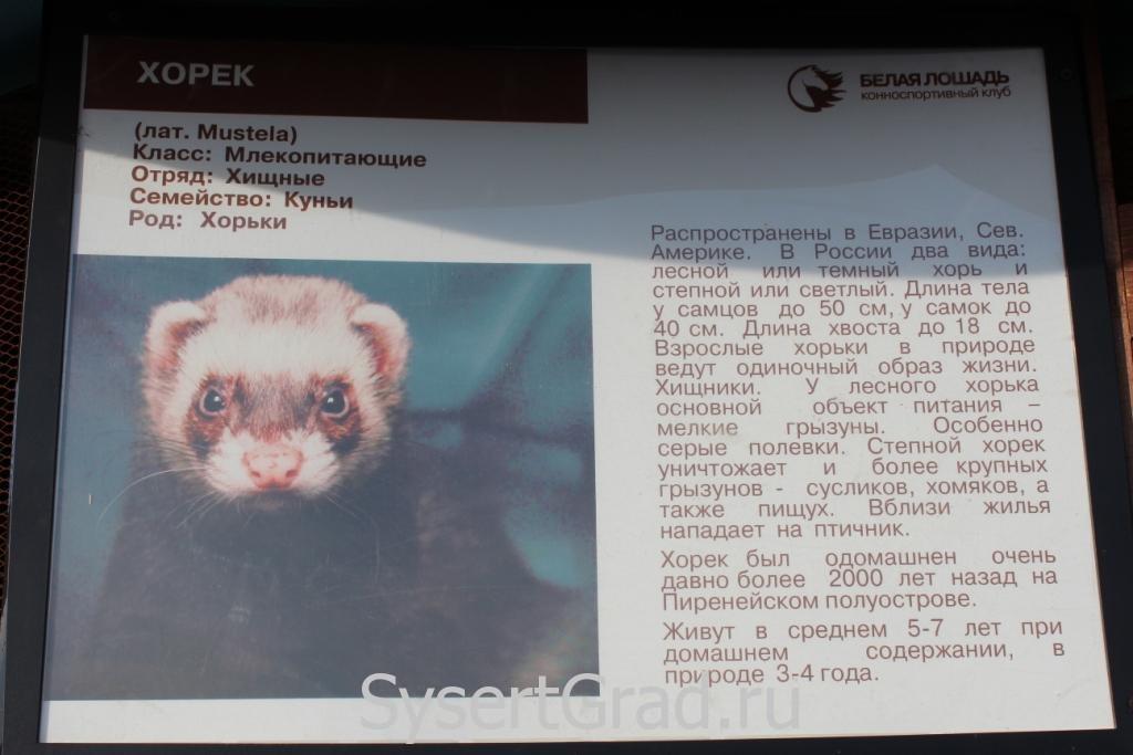 Информационный плакат о хорьке