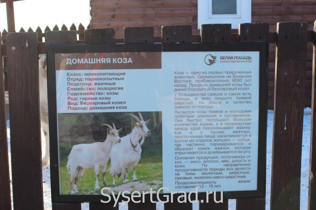 Информационный плакат о козах