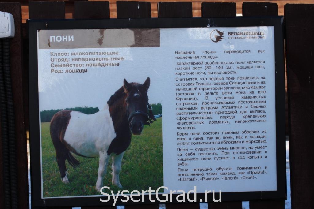 Информационный плакат о пони