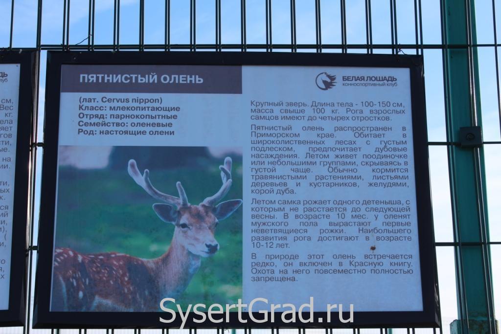 Информационный плакат о пятнистом олене в КСК Белая лошадь