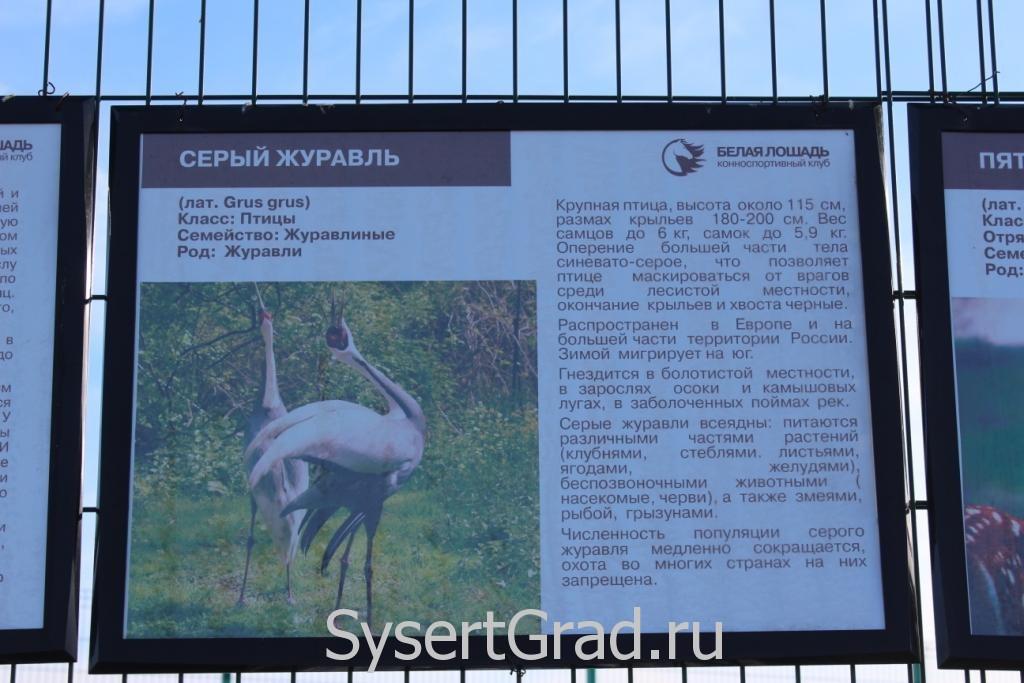 Информационный плакат о журавлях, хотя я их не видел