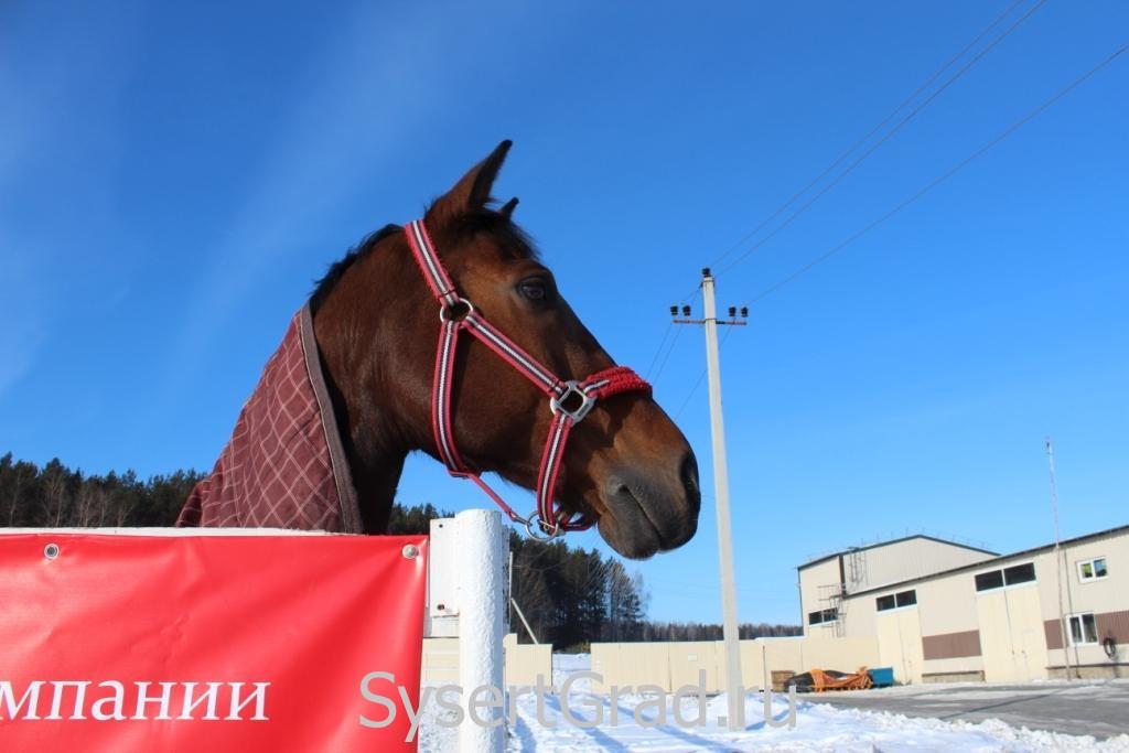 Лошадь иногда отвлекалась и смотрела в сторону