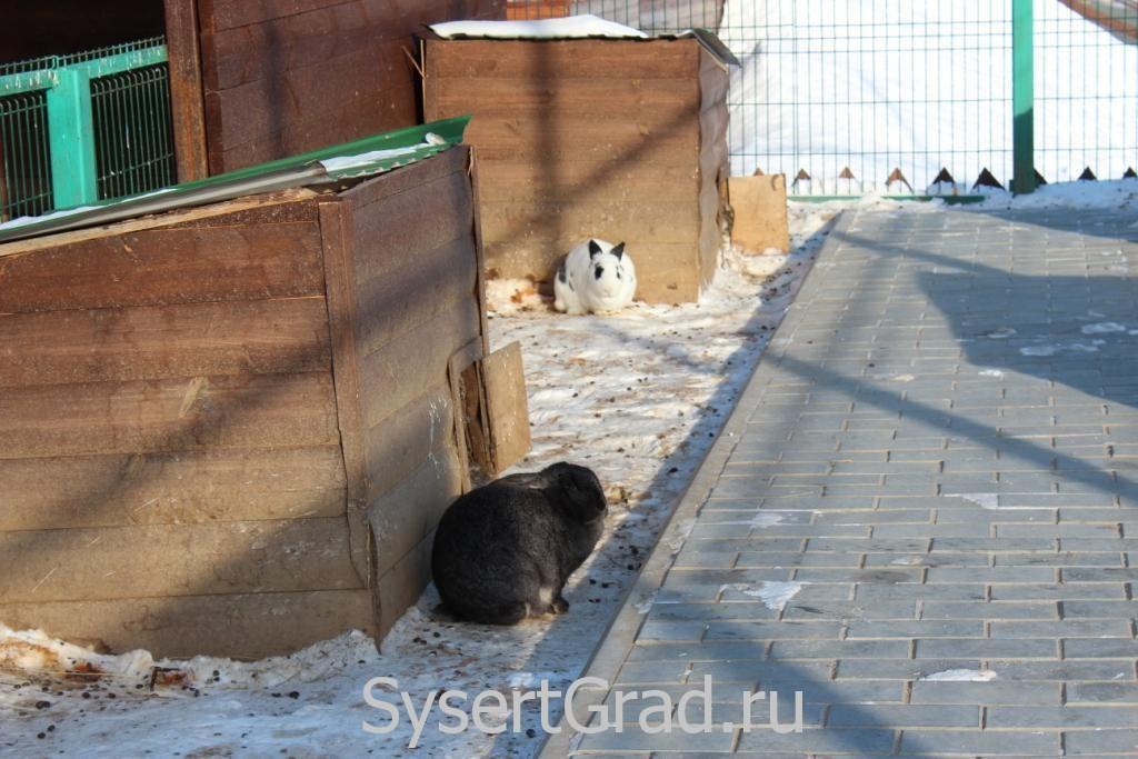 Мне показалось, что кролики замерзли