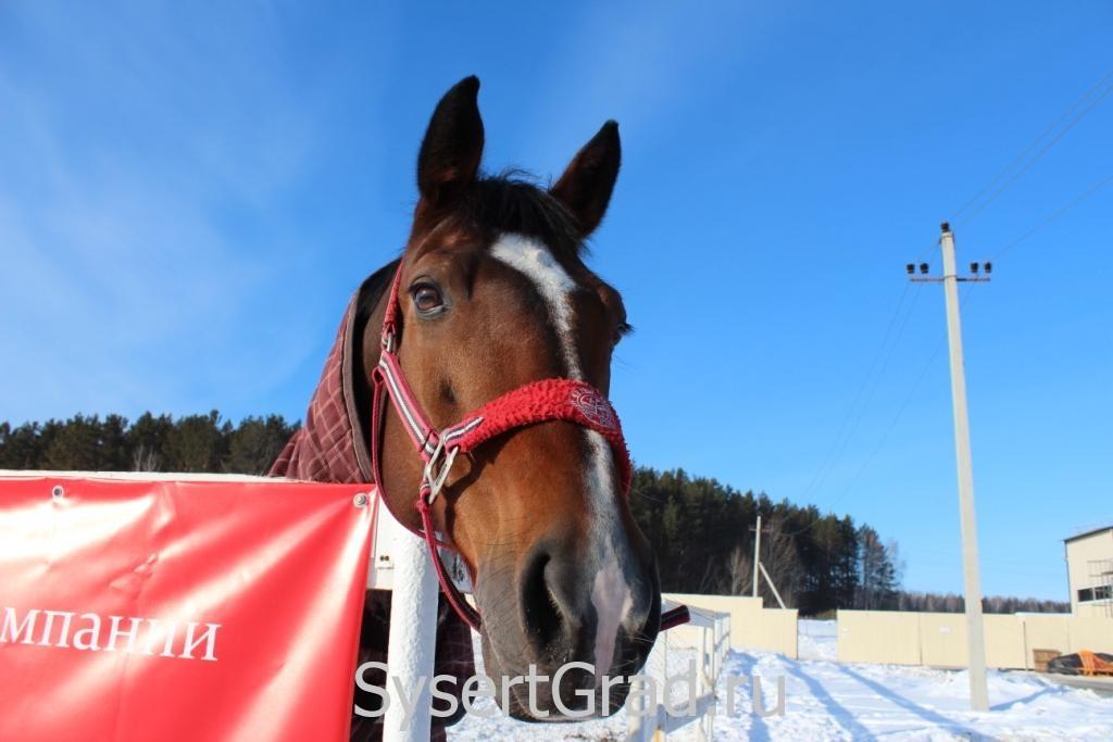 Одна из лошадок конноспортивного клуба Белая Лошадь