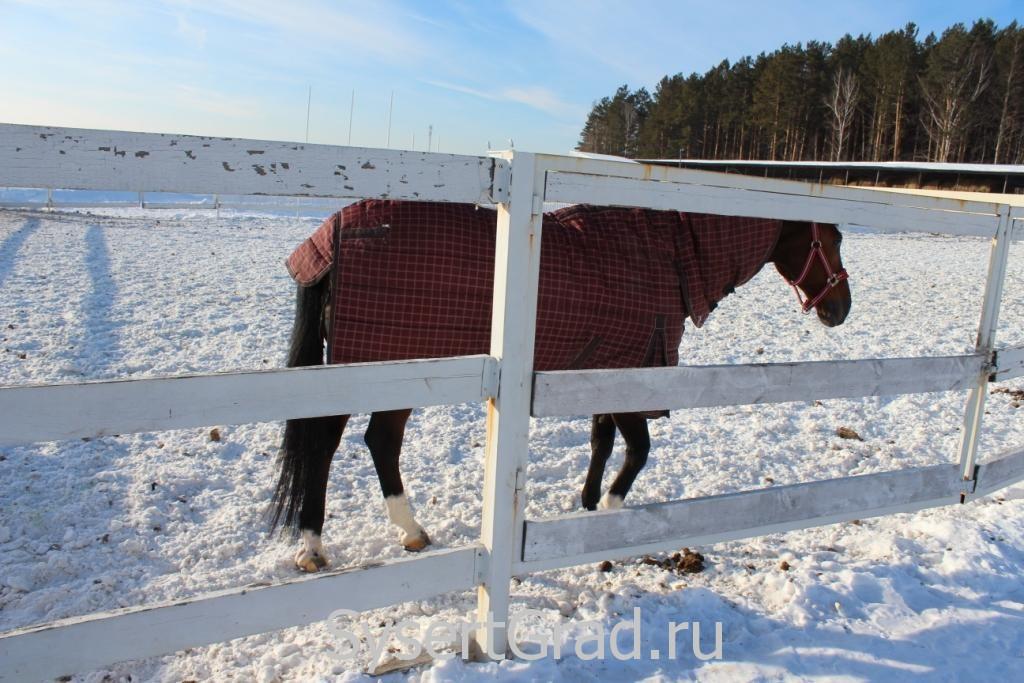 Оказывается, лошади носят одежду