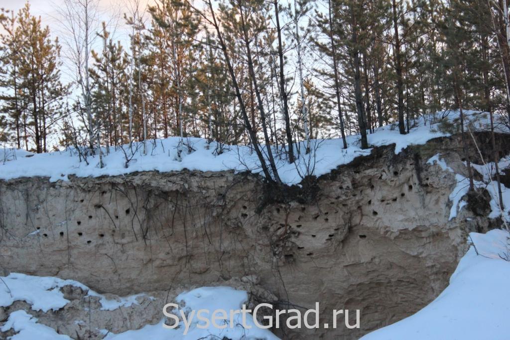 Стрижиные гнезда у поселка Асбест