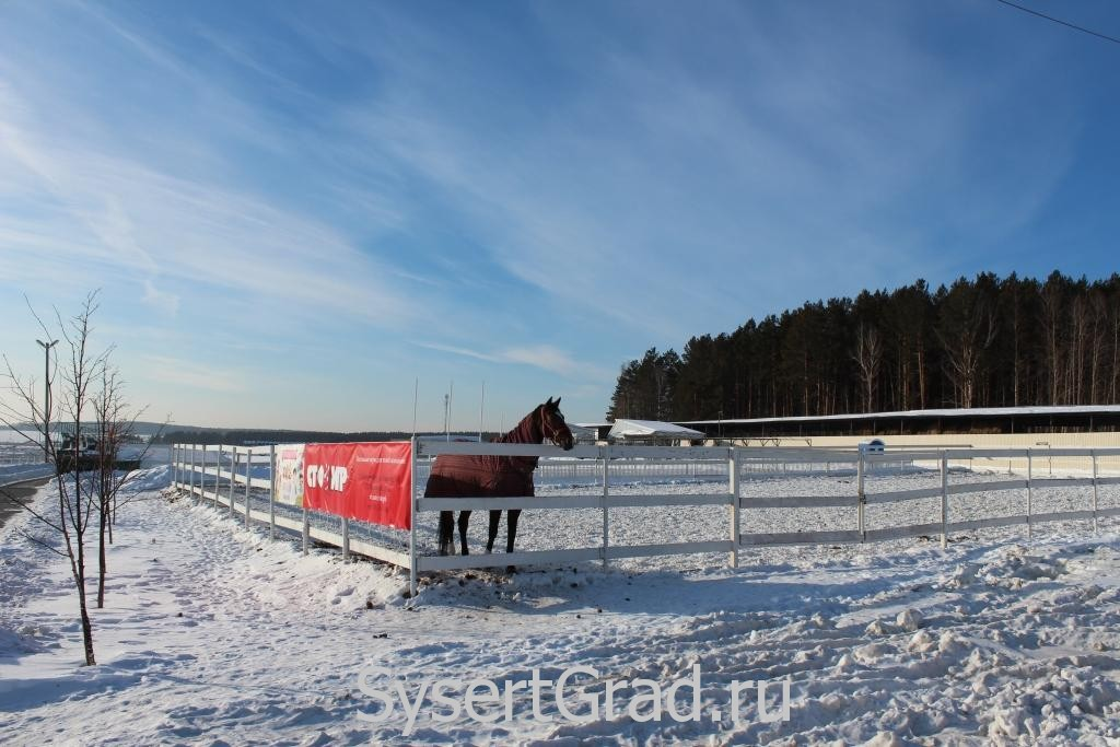 Вот так гуляют лошадки в конноспортивном клубе Белая Лошадь