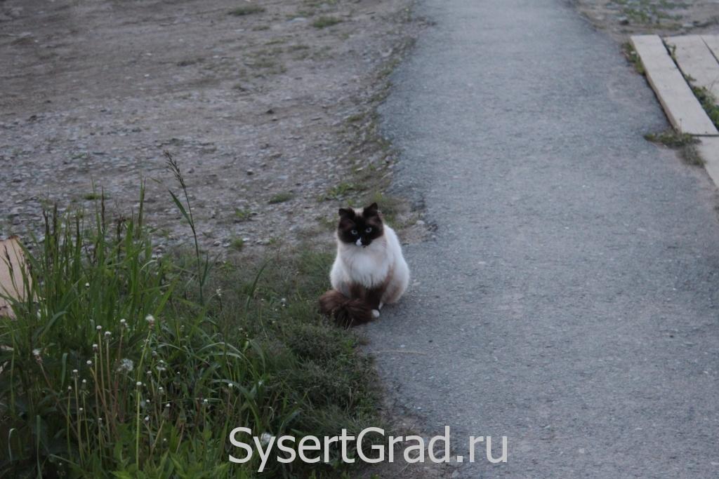 Кошка удивляется