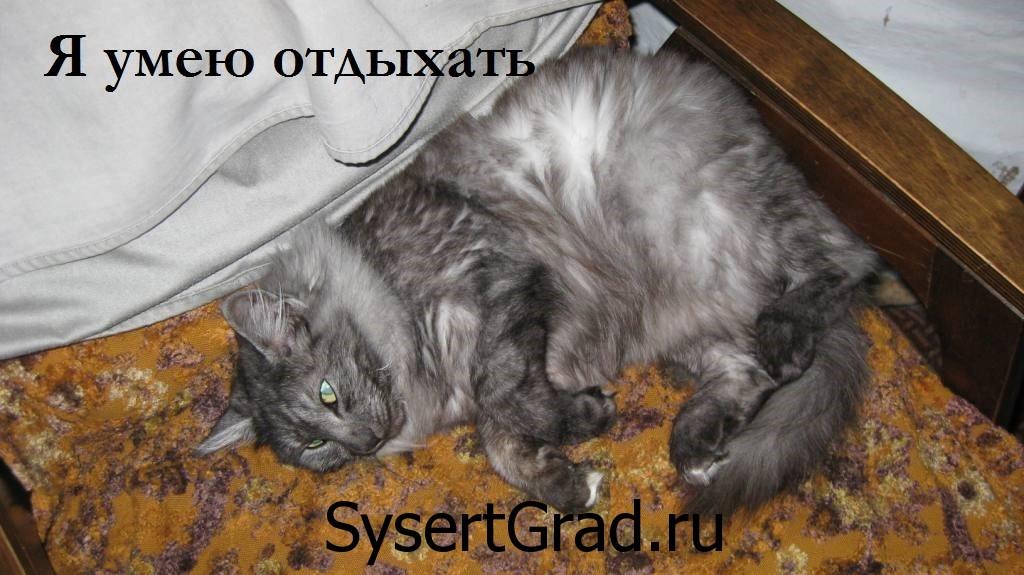 Кот умеет отдыхать