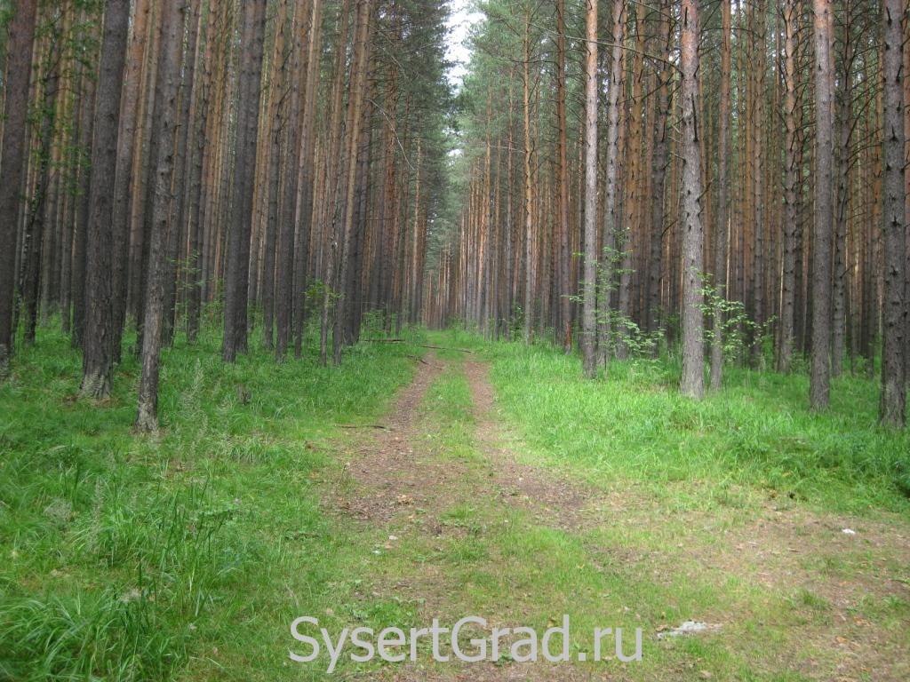 По этой дороге я искал грибы