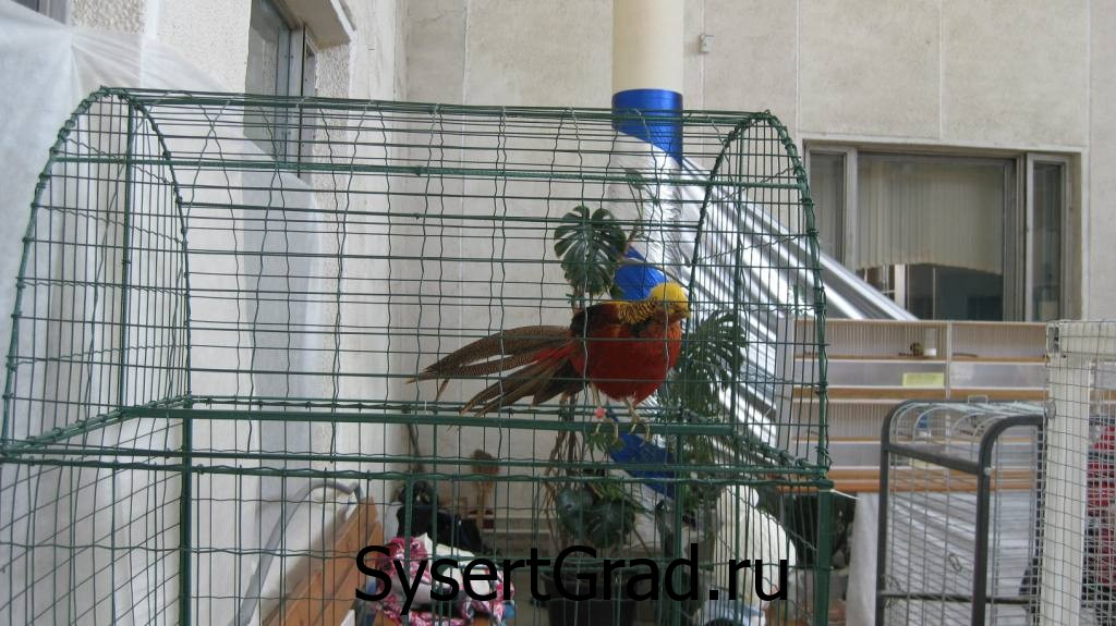 Выставка птиц в городском центре досуга Сысерти