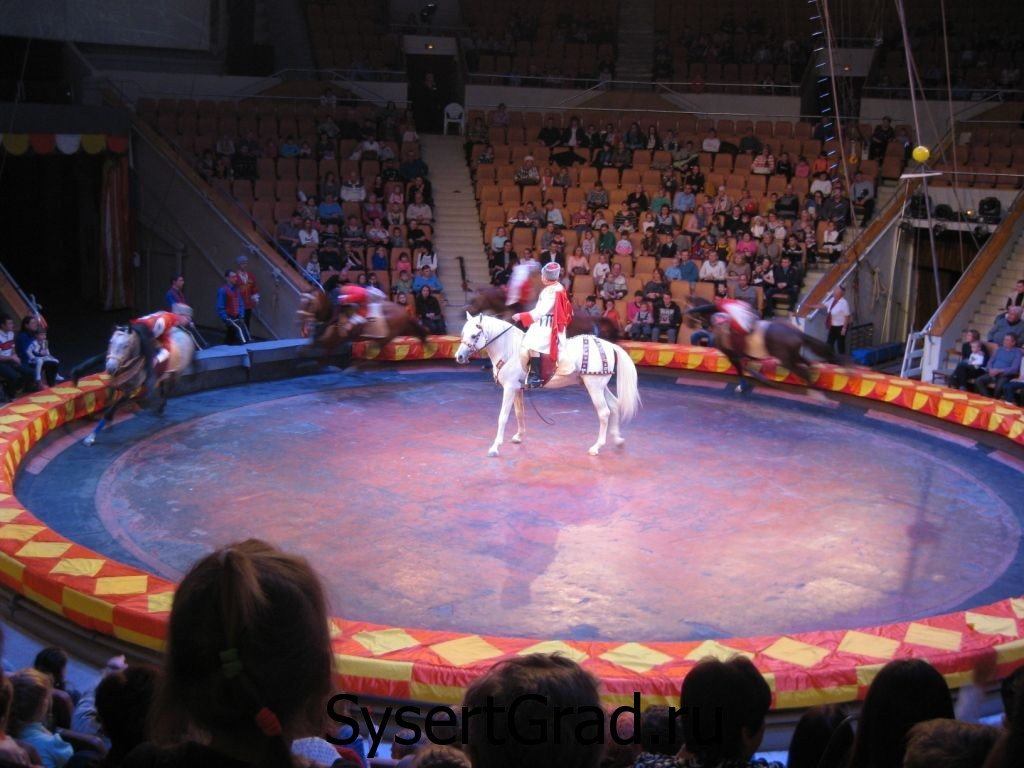 Номер на лошадях в цирке