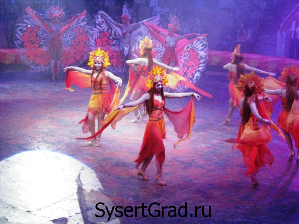Выступление в цирке