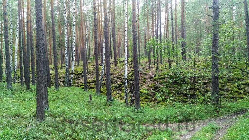 Отвалы на тальков камне со временем покрылись растительностью