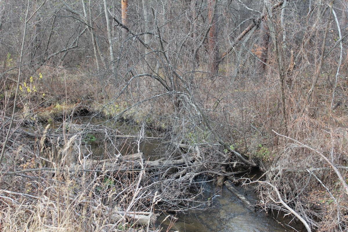 Река Каменка 30