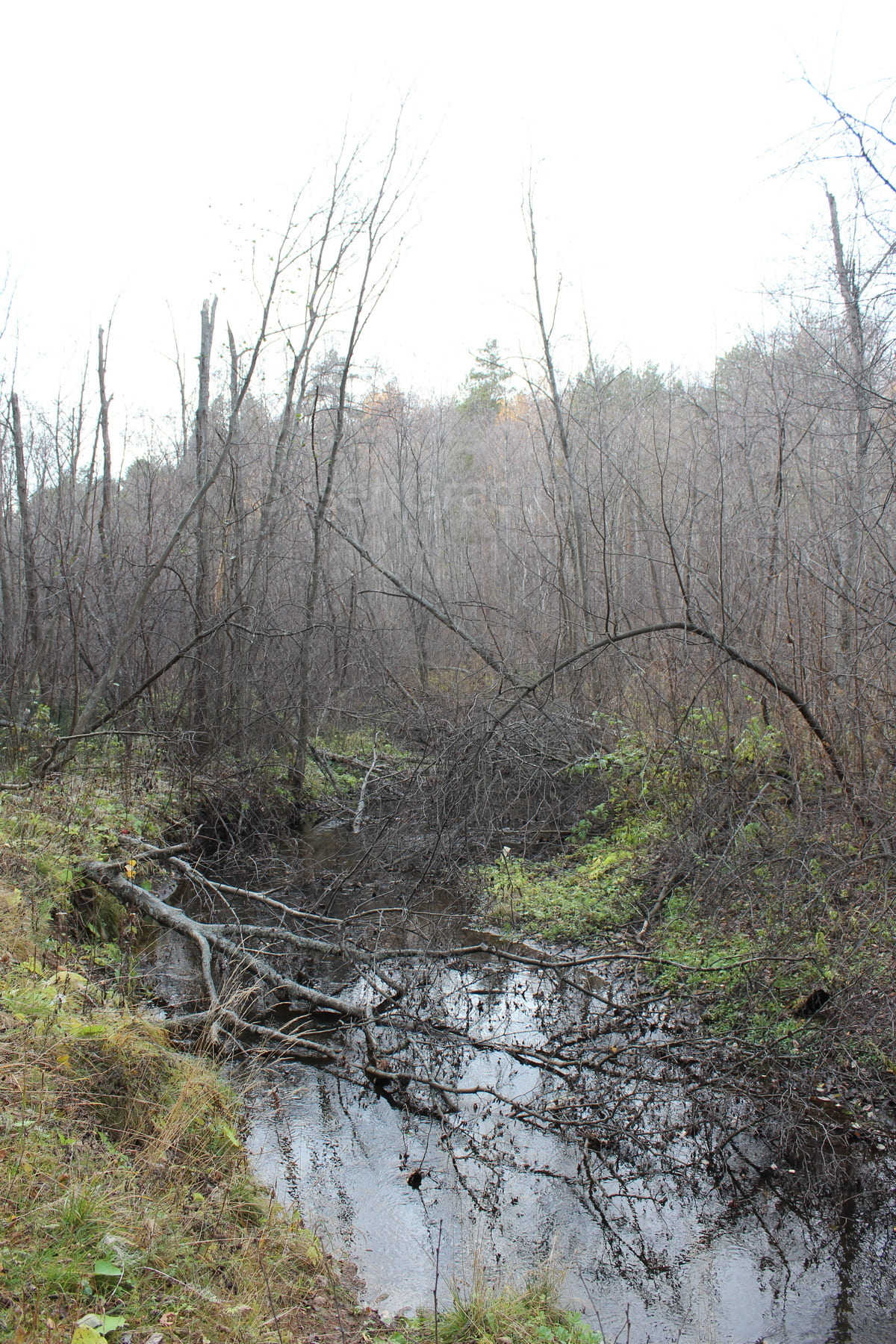 Река Каменка 31
