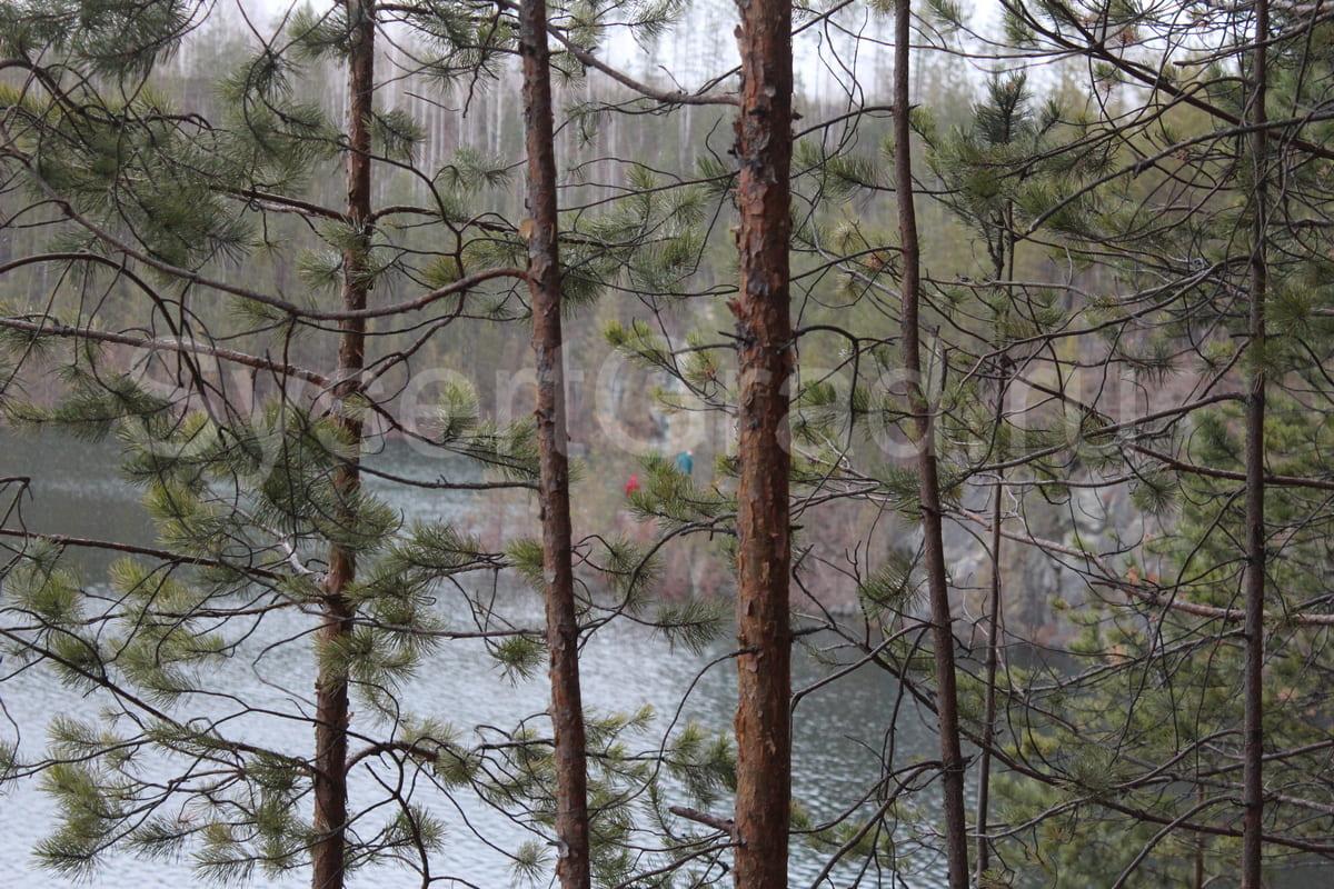 Карьер зарастает деревьями, но зато при падении можно ухватиться