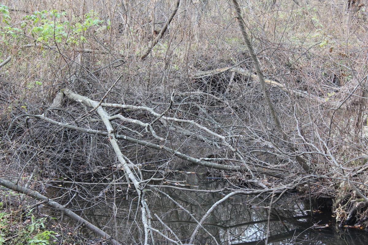 Река Каменка 40
