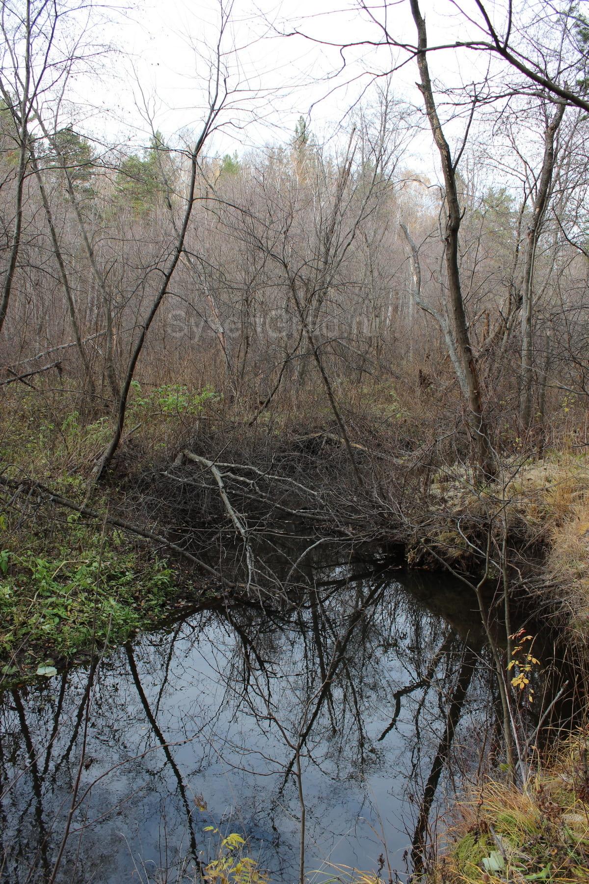 Река Каменка 72